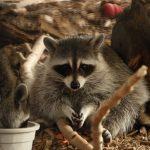 Small Mammals & Reptiles